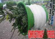 Cheapest Non Shed Christmas Trees Finglas Ashbourne Dublin Meath