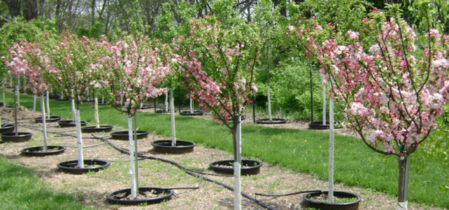 treesandshrubs