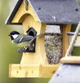 Best Wild Bird Seed Supplier in Finglas Dublin and Ashbourne Meath